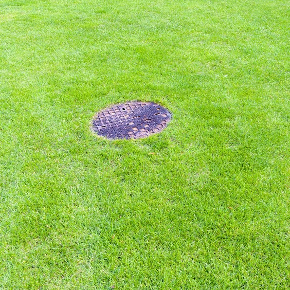 grass and sewer lid