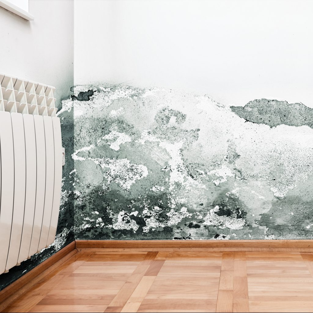 Mold on an Interior Wall