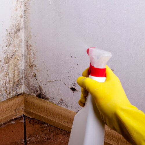 Spraying cleaner on a moldy wall.